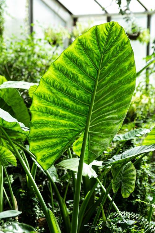 Free stock photo of botanic, botanic garden, exotic plant, green leaf