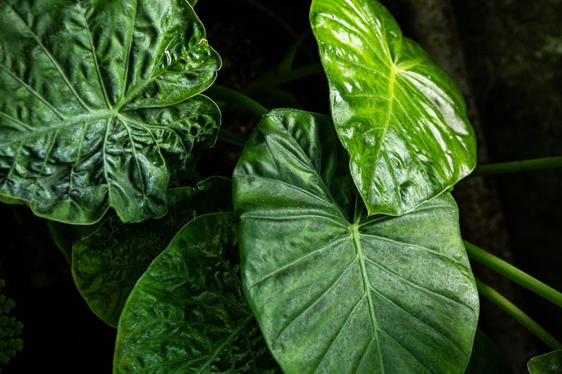 blätter, botanisch, dunkelgrün