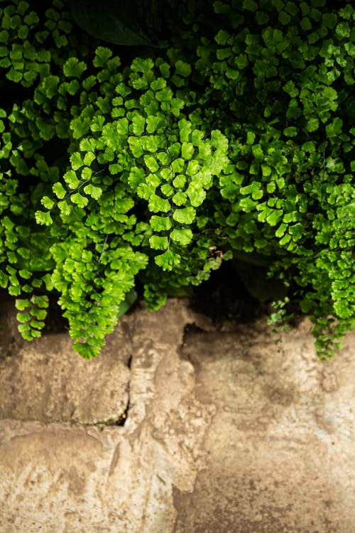 Free stock photo of exotic plants, fern, green fern, Green Plant
