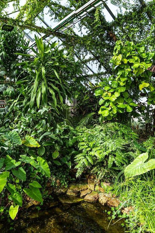 Free stock photo of botanic, botanical, botanical garden, exotic plants