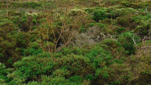Immagine gratuita di alberi, ambiente, boschi, crescita