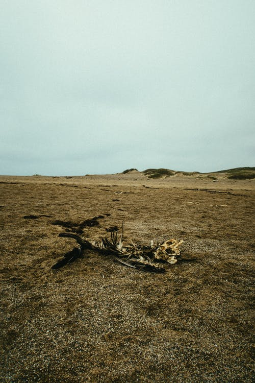 Foto profissional grátis de ao ar livre, areia, aumento, brilhante