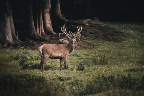 Free stock photo of alps, antler, autumn, autumn mood forest