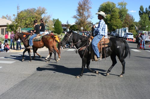 Imagine de stoc gratuită din cowboy, paradă