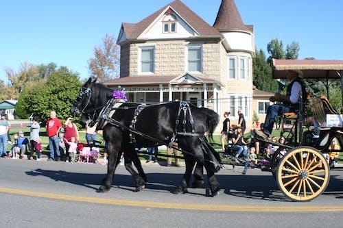 四輪的運貨馬車, 遊行, 馬 的 免費圖庫相片