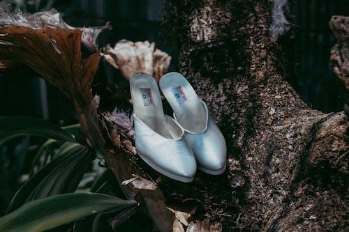 Photos gratuites de arbre, cérémonie de mariage, chaussures, chaussures de femme
