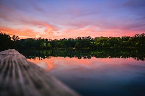Photos gratuites de arbre, aube, coucher de soleil, crépuscule