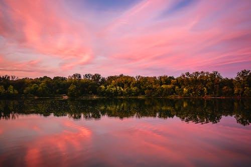 Безкоштовне стокове фото на тему «високі дерева, вода, дерева, Захід сонця»