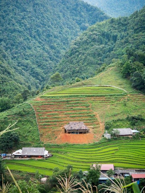 Kostenloses Stock Foto zu berg, grün, reisfeld, terrasse