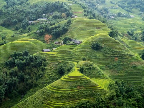 Fotos de stock gratuitas de campo de arroz, montaña, terraza, verde