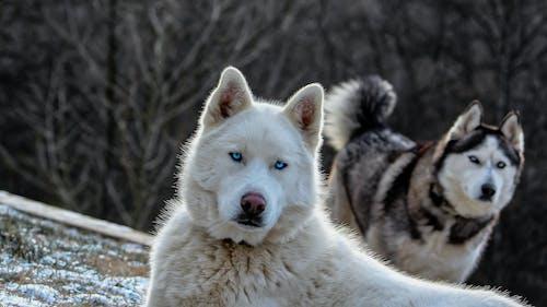 คลังภาพถ่ายฟรี ของ ข้างนอก, ขาวดำ, สัตว์, สุนัข