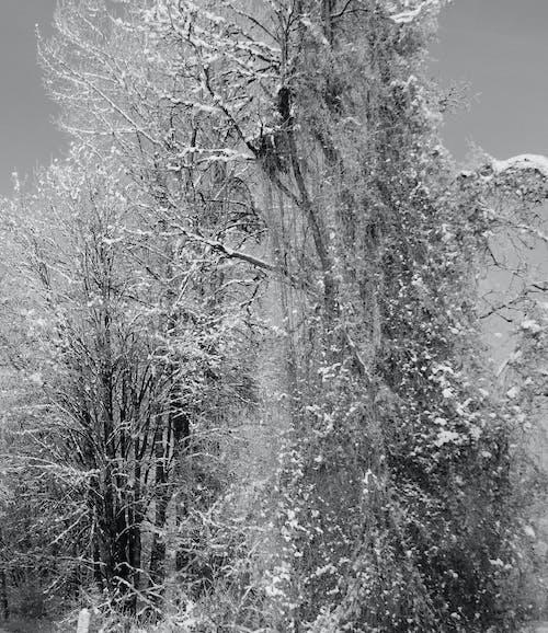 Δωρεάν στοκ φωτογραφιών με χιόνι