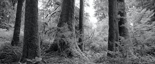 Δωρεάν στοκ φωτογραφιών με τροπικό δάσος