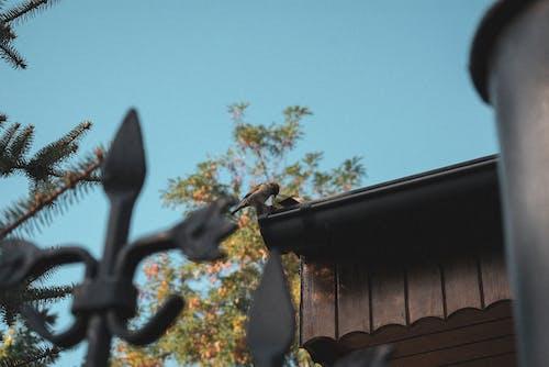 Ingyenes stockfotó ég, épület, fa, kerítés témában