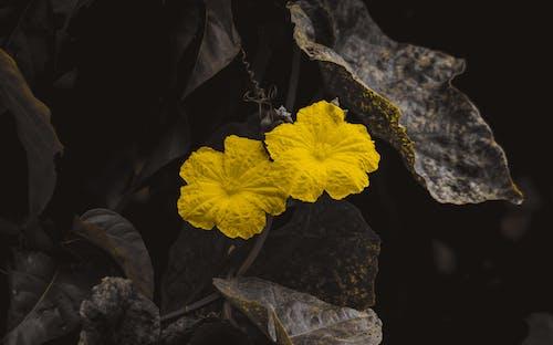คลังภาพถ่ายฟรี ของ ดอกสีเหลือง