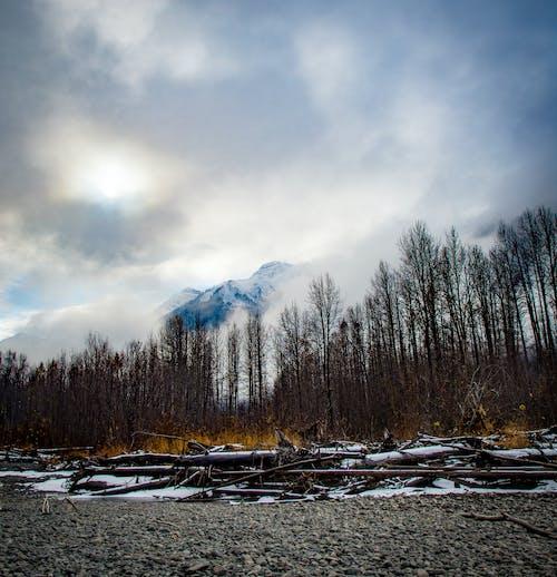 Immagine gratuita di alberi spogli, ambiente, boschi, cielo
