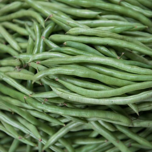 강낭콩, 건강한, 날 것, 녹색의 무료 스톡 사진