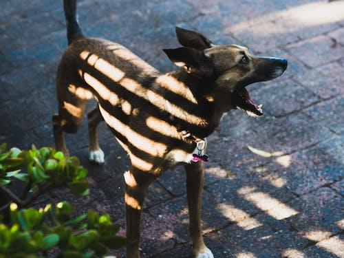 Foto profissional grátis de cachorro, filhote