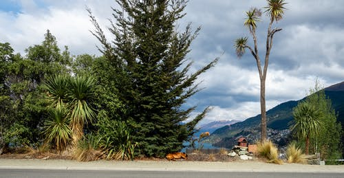 Foto profissional grátis de árvore, cachorro, caixa postal, lago