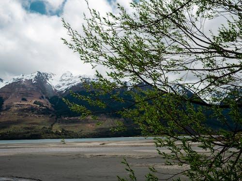 Foto profissional grátis de árvore, glenorchy, lago, montanha