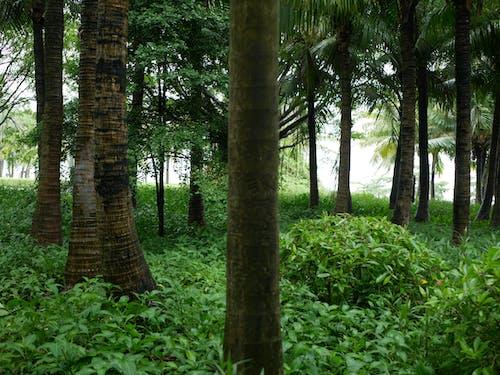Gratis lagerfoto af grøn, skov, tropisk