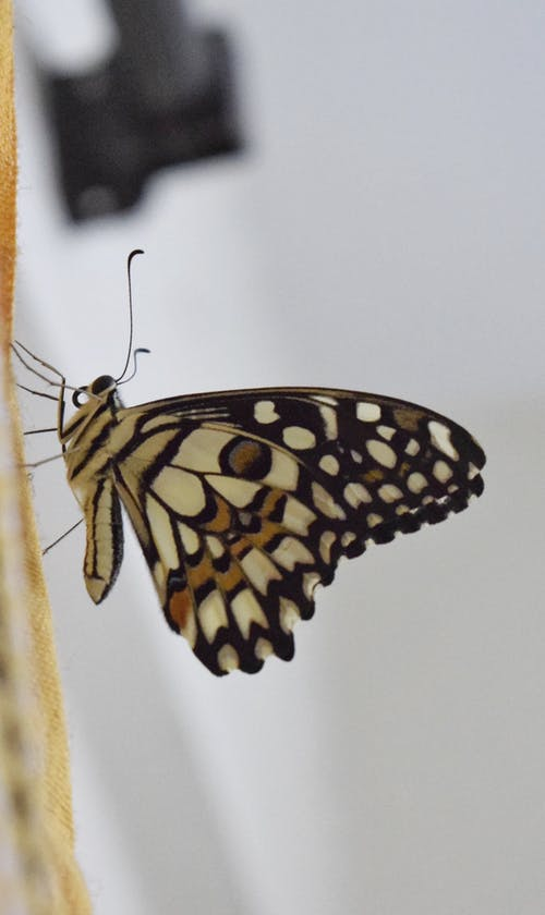 Základová fotografie zdarma na téma mol, motýl, moucha domácí