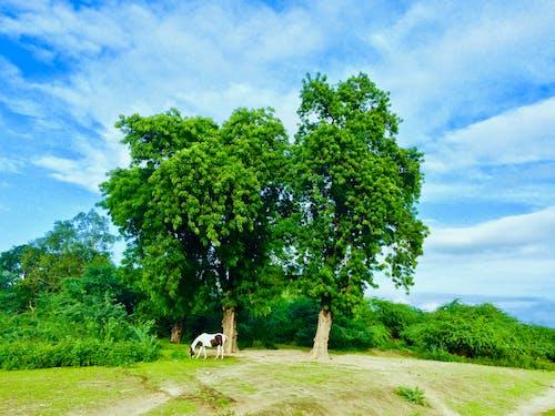 Kostenloses Stock Foto zu bewölkter himmel, pferd, schönheit in der natur