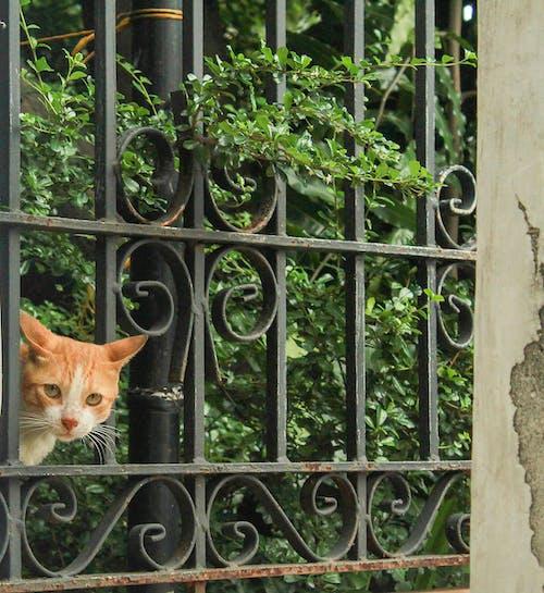 Free stock photo of animal, cat, philippines
