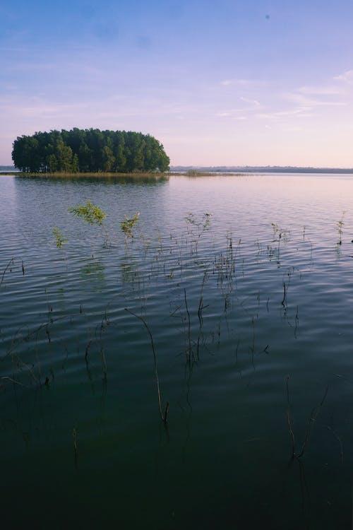 Ilmainen kuvapankkikuva tunnisteilla aamu, aamuaurinko, järvi, luonto