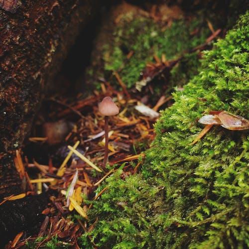 Fotos de stock gratuitas de bosque, hongos, seta, seta de bosque