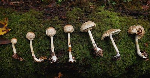 Fotos de stock gratuitas de bosque, bosques, hongos, seta