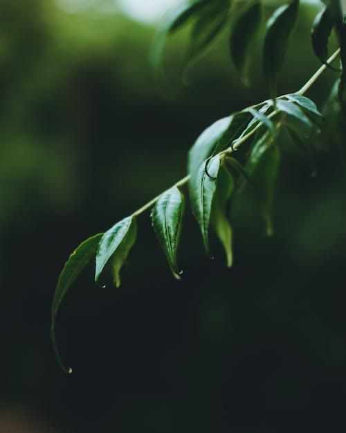 Gratis stockfoto met bladeren, bloeiend, bloesem, blurry achtergrond
