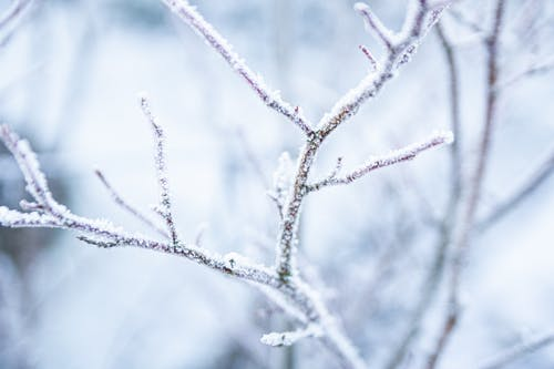 Free stock photo of frost, frosty weather, leaves, nature