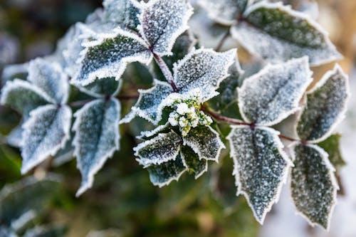 Ilmainen kuvapankkikuva tunnisteilla flunssa, huurteinen, jääkylmä, jäätynyt
