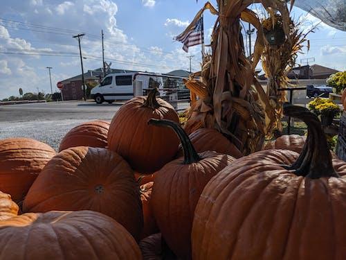 Kostenloses Stock Foto zu halloween, herbst, kentucky, kürbis