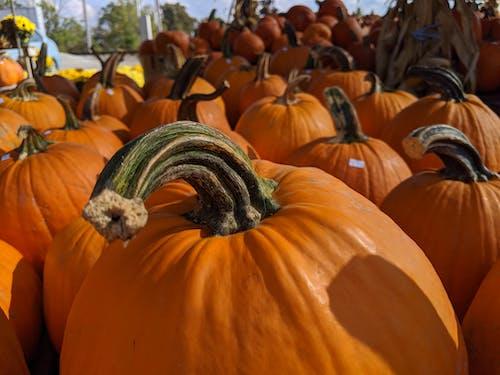 Kostenloses Stock Foto zu geschnitzter kürbis, halloween, halloween-kürbis, kürbis