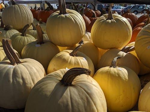 Kostenloses Stock Foto zu bauernmarkt, halloween-kürbis, kürbis
