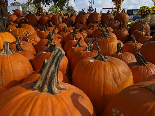 Kostenloses Stock Foto zu halloween, jack o lantern, kürbis, obstmarkt
