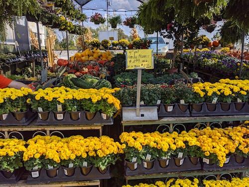 Kostenloses Stock Foto zu bauernmarkt, chrysantheme