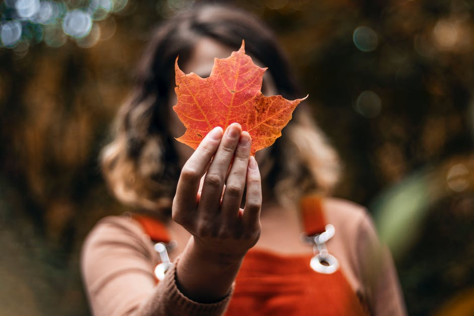 Shallow focus photo of person holding red maple leaf