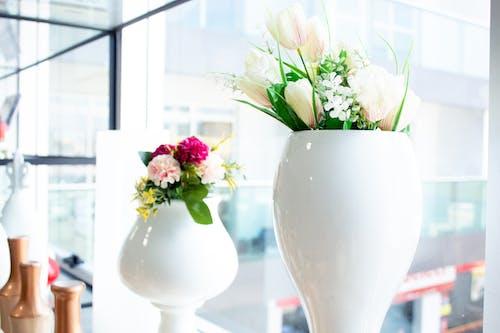 Ảnh lưu trữ miễn phí về cây xanh, chậu hoa, hộp thực vật, nở hoa