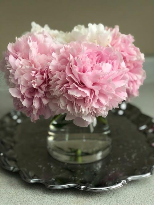 Imagine de stoc gratuită din bujor, flori frumoase