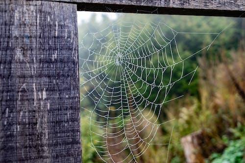Kostenloses Stock Foto zu spinnennetz