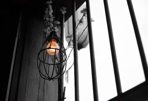 Foto profissional grátis de flores secas, janelas, lâmpada
