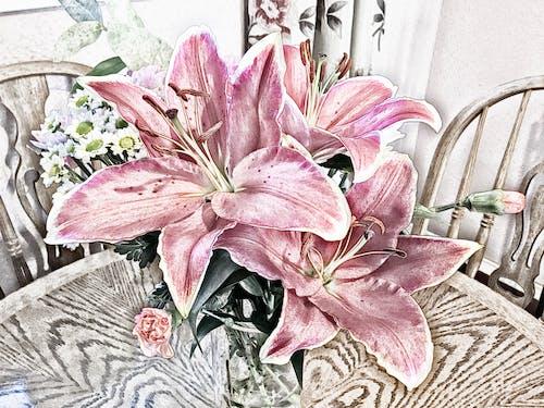 Immagine gratuita di fiori, gigli, rosa
