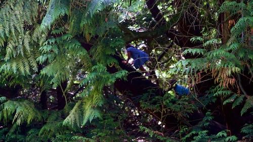 Fotos de stock gratuitas de alpinismo, arboles, bosque, escaladores
