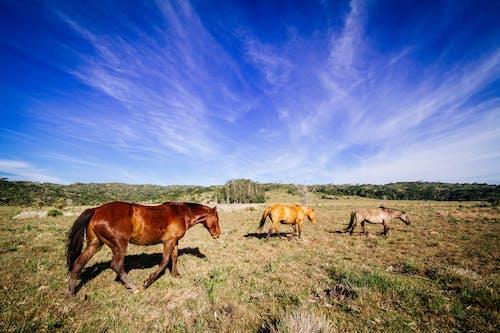 Δωρεάν στοκ φωτογραφιών με άγριος, αγρόκτημα, βοσκοτόπι, γήπεδο