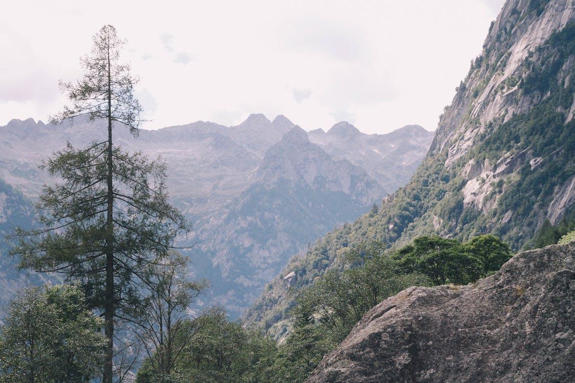 การผจญภัย, ความเป็นป่า, งดงาม