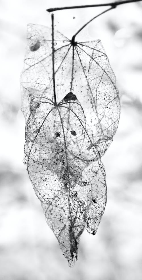Free stock photo of dead, death, leaf
