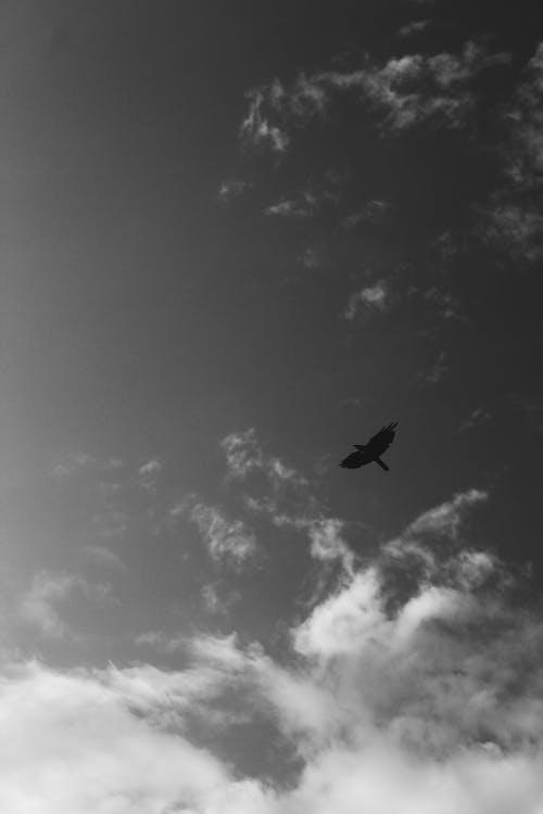 bulut, karga, siyah ve beyaz içeren Ücretsiz stok fotoğraf